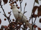 Nube mirlo blanco-cloud ,the white blackbird