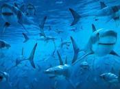 Posters Tiburones