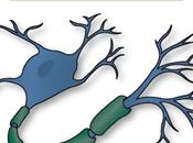 diciembre, para Esclerosis Múltiple