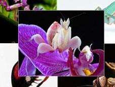 Conoce cinco mantis religiosas bonitas planeta