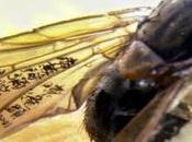 Esta Prohibido haya moscas baños públicos Beijing