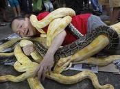 recibe llegada chino serpiente este Chino NOTICIAS ACTUALIDAD