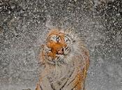 National Geographic premia mejores fotografías