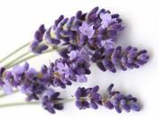 Aromaterapia Alzheimer