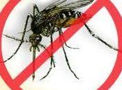 Tratamientos naturales para dengue