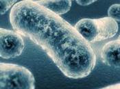 Bacterias para depuradoras