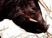 """Cine Pediatría (161). """"Bestias salvaje"""", resiliencia desde primera infancia pequeñas cosas"""