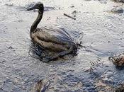 Estados Unidos tendrá marea negra durante meses