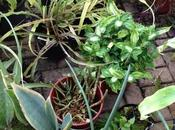 regalan plantas