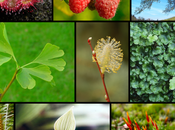 secreto plantas