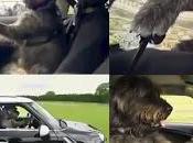 perros conducen Nueva Zelanda