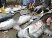Tiburones peligro