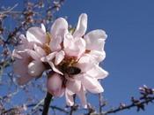 Plantas Marzo, Floración