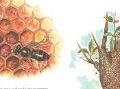 Educación ambiental, educación apícola.