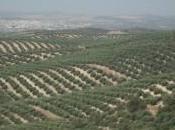 Viaje secretos aceite oliva