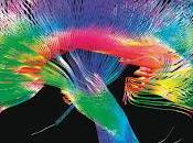 Nuestro cerebro desnudo: human connectome project