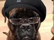 "bautizan perro como ""Samuel L..."
