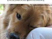 Poema perro