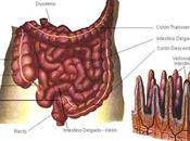 Factores influyen estado mucosa intestinal