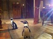 Águila Roja: silencio, pingüinos rodando