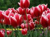 Abril: primavera, flores, luz, sol, Aries tauro