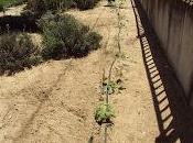 Diversas hortalizas sobre malla antihierba