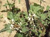 Flores huerto abril