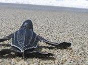 tortugas pueden hacer planes