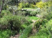 nuevo verde urbano. Jardines comestibles