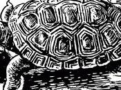 tortuga (the terrapin)» patricia highsmith