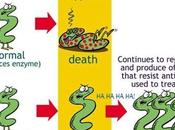 Bacterias hacen resistentes antibióticos| investigación [feedly]