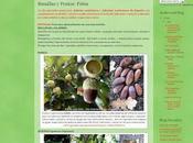 Plantar árboles José Luis Sáez