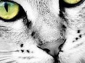 Ojos gato