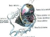 Oftalmología: arte?