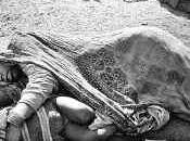 sentencia Bhopal