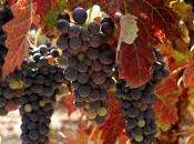 Enoturismo Rioja!!!