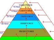 Componente ecosistemico icfes