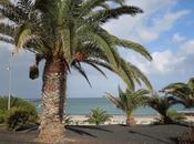 Lanzarote: Costa Teguise
