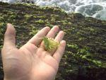 Algas creadoras vida: Recurso didáctico Primaria