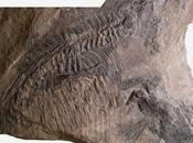Fósil ictiosaurio confunde expertos dinosaurios