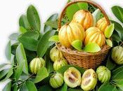 Garcinia Cambogia extracto (HCA). Bajar peso