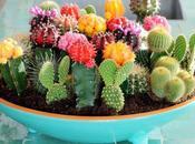 buena solucion: plantar cactus