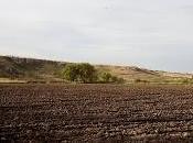 crisis campo mexicano