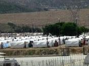 255. Refugiados sirios Turquía