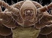Coevolución endosimbiosis tras parasitismo nuestros piojos.