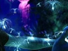 "James Cameron visita Almería busca escenarios para ""Avatar"