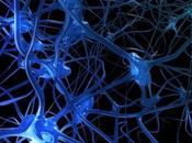 Mecanismos celulares neuroplasticidad