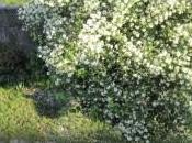jardín Sostenible Cualquiera: Puede Tener.Árboles Arbustos Ornamentales