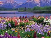 frases célebres primavera