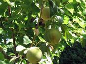 árboles frutales: momento hacerse cargo ellos!